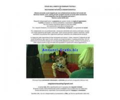 STAGE NELL'AMBITO DEI SEMINARI TEATRALI & RECITAZIONE NATURALE CINEMATOGRAFICA