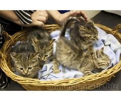 Gattini tigrati da adottare