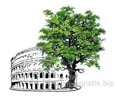 Consulenza tecnica verde urbano Roma