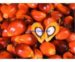Palma olio e Palmisti oil greggio,raffinato