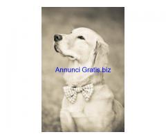 """Il cane al proprio matrimonio: con """"Wedding Dog Sitter"""" si può"""