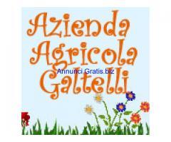 Agricola Galtelli prodotti agricoli, giardinaggio, alimenti ed antiparassitari per animali.